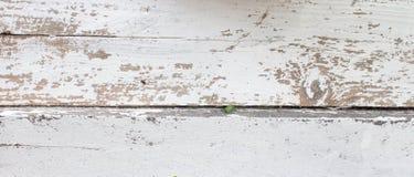 Белая деревянная предпосылка со старой краской, отказами, scuffs Космос под текстом Старый пень в побелке стоковые изображения rf