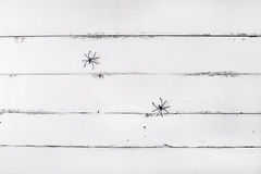 Белая деревянная предпосылка с 2 пауками предпосылка halloween Стоковые Изображения