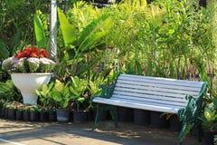 Белая деревянная скамья в тропическом саде стоковое изображение rf