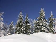 белая зима стоковое изображение