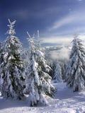 белая зима стоковые фотографии rf