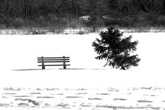 белая зима Стоковые Изображения RF