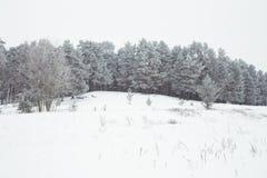 Белая и холодная древесина Много идут снег на зиме 2019 стоковые фотографии rf