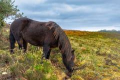 Белая лошадь во внутри новом Forrest Великобритании стоковые изображения rf