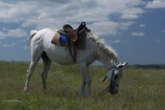 Белая лошадь в проводке Стоковое фото RF