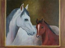 Белая лошадь и коричневый осленок с коричневой рамкой стоковое изображение rf