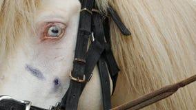 Белая лошадь с желтыми волосами стоковые изображения rf