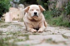 Белая мужская собака утомлянная больным Стоковые Фото