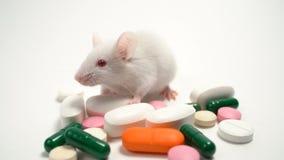Белая мышь лаборатории около пестротканых планшетов Разработка концепции и испытывать лекарств, медицинское исследование видеоматериал