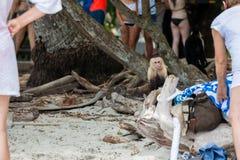 Белая обезьяна стороны на пляже Стоковая Фотография RF