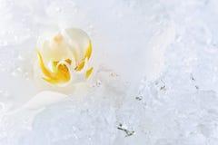 Белая орхидея на льде Стоковая Фотография