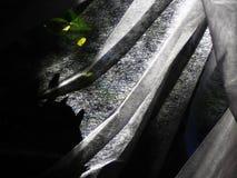 Белая отвесная ткань с pleats падает на зеленые кусты стоковое изображение rf