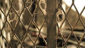Белая паутина на загородке старых и загрязненной стали металла Стоковая Фотография RF
