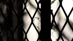 Белая паутина на загородке старых и загрязненной стали металла Стоковые Фото
