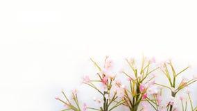 Белая предпосылка и маленькие розовые цветки на угле стоковые изображения rf