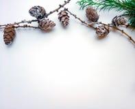 Белая предпосылка с впихывает и зеленая ветвь стоковая фотография rf