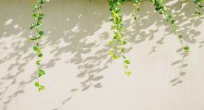 Белая предпосылка с зелеными листьями лист и тени Стоковое Изображение RF