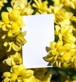 Белая прямоугольная вертикальная карточка листа бумаги в желтом цвете цветет заводы kalandiva стоковая фотография rf