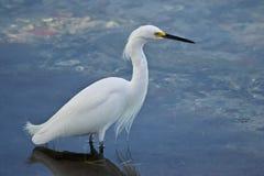 Белая птица стоковая фотография
