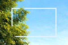 Белая рамка на дереве и небе, на утре ярком Стоковые Фото