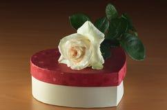 Белая роза на коробке Стоковое Изображение RF