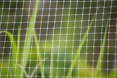 Белая сетка и зеленая трава Стоковые Фото