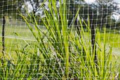 Белая сетка и зеленая трава стоковое фото rf