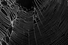 Белая сеть ` s паука на черной предпосылке Стоковая Фотография