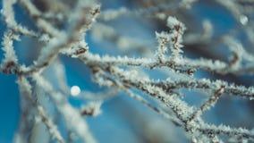 Белая снежинка на ветви дерева стоковое изображение