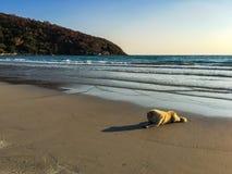 Белая собака на пляже стоковое изображение