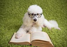 Белая собака с стеклом стоковые изображения rf