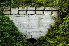 Белая стена предусматриванная с растительностью стоковое фото