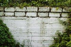 Белая стена предусматриванная с растительностью стоковые изображения rf