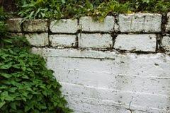 Белая стена предусматриванная с растительностью стоковые фото