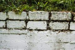 Белая стена предусматриванная с растительностью стоковое фото rf