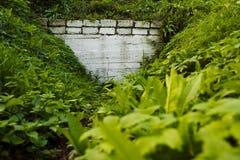 Белая стена предусматриванная с растительностью стоковая фотография rf