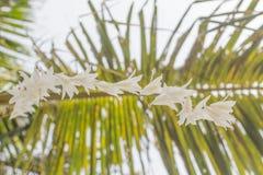 Белая трава цветет, заход солнца вечера предпосылки bokeh Стоковая Фотография RF