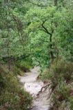 Белая тропа песка в панораме национального леса pignons trois французской стоковое фото