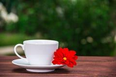 Белая чашка чаю и красный цветок на деревянном столе в зеленом саде скопируйте космос Стоковое фото RF