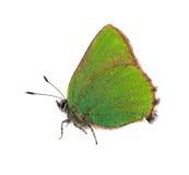 белизна бабочки изолированная зеленым цветом малая Стоковая Фотография RF