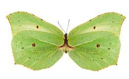 белизна бабочки изолированная зеленым цветом светлая Стоковая Фотография