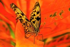белизна вала нимфы цветка красная Стоковые Фото