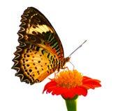 белизна вектора иллюстрации бабочки предпосылки Стоковые Фотографии RF