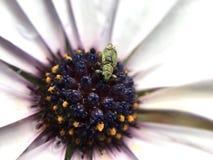 белизна весны пущи цветка Стоковое фото RF