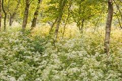 белизна весны Стоковое Изображение