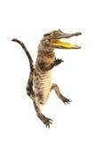 белизна вещества изолята крокодила Стоковая Фотография