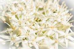 белизна взгляда близкой весны цветков малюсенькая Стоковое фото RF
