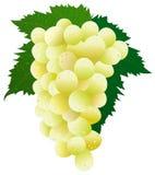 белизна виноградины Стоковые Фото