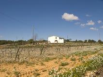 белизна виноградника дома Стоковое фото RF