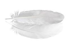 белизна вихруна пера Стоковые Изображения